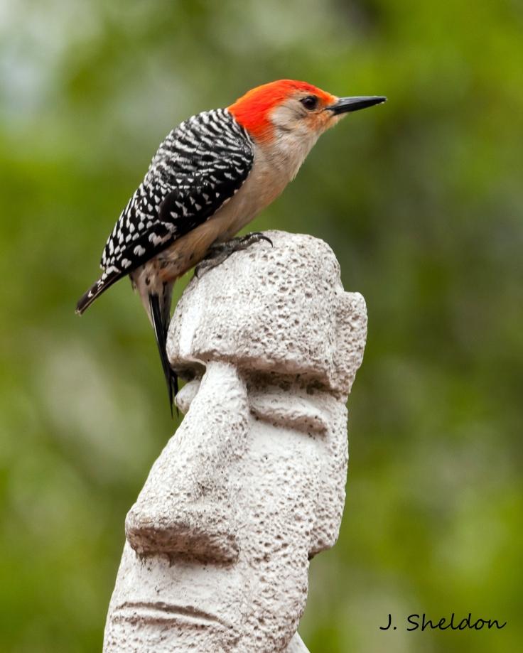 Woodpecker 1(s)