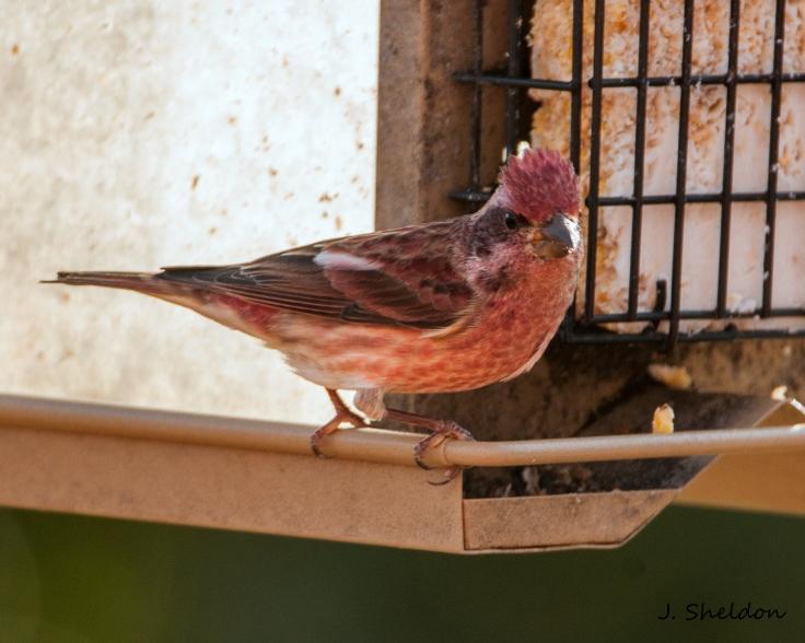 Finch 1(s).jpg
