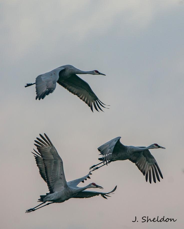 Cranes 13(s)